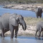 Botswana 2004 thumbnail