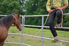 53 (CrevanNight) Tags: spring horse horses farm farms country equine train training thoroughbred thoroughbreds yearling yearlings cute pretty couple sweet equines new experience life lover stubborn young amish lancaster pennsylvania pa