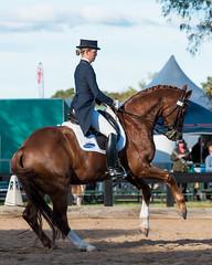 160611_Clarendon_Winter_Festival_3162.jpg (FranzVenhaus) Tags: horses sydney australia riding newsouthwales athletes aus equestrian supporters riders officials dressage spectatorsvolunteers