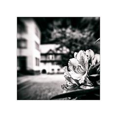 N201600694 (Thierry Lubin (www.meinstream-fotografie.de )) Tags: cistercienserinnenabtei thierrylubin 3570mm abtei badenbaden badenwrttemberg blackwhite blackandwhite bw fotografie kloster lichtental lubin meinstream meinstreamfotografie quadrat schwarzundweiss schwarzweiss sw thierry