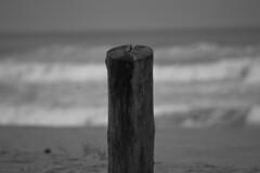 Seor Tronco (Javier Villanueva Velasco) Tags: bw byn blancoynegro beach mar log playa acapulco tronco ocano