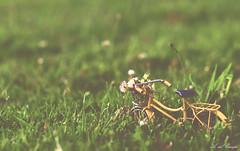 Spring (A. del Campo) Tags: flowers light naturaleza flores green primavera luz nature grass bike bicycle yellow spring spain nikon bokeh 85mm naturallight bicicleta amarillo bici nikkor hierba luznatural nikond7000
