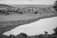 (Paulo Nunes Jr.) Tags: fazenda pedro sojoo 2016 alagoinhas junho