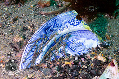 Broken China Plate (ShaunMYeo) Tags: scubadiving inkwells gibraltar calpe underwaterphotography  gibilterra ikelite      gibraltr  cebelitark gjibraltar ibraltaro hibraltar xibraltar giobrltar gibraltrs gibraltaras ibilt