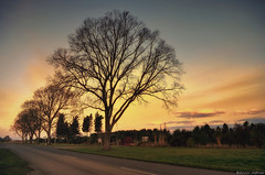 Warm Sunset in Winter (Kevin_Jeffries) Tags: trees winter light sunset sky color tree nature landscape evening warm flickr dusk perspective serene kevinjeffries