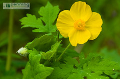 Green & Yellow (MattPenning) Tags: flower green nature leaves yellow spring pentax potd yellowflower sap k5 springfieldillinois mattpenning kmount mattpenningcom abrahamlincolnmemorialgarden penningphotography justpentax pentaxsmcda50135mmf28edifsdm pentaxk5