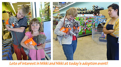 They love everyone! (pennyroyalnorwich) Tags: dogs nikki foster mikki adoptionevent shihpoos