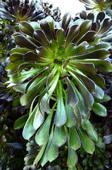 Green Plant 0004
