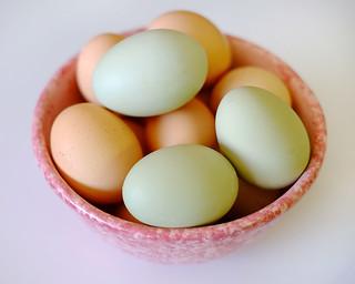 Green Eggs!!