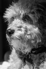 Archie in Shadow (rogerhoward) Tags: california dog animals archie tehachapi centralcalifornia stallionsprings