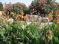 070 - Flowers (Scott Shetrone) Tags: flowers plants other graveyards events places athens greece 5th kerameikos anniversaries