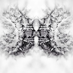Caterpillar. (Graph-One) Tags: life blackandwhite color web spiderweb couleur mirroir catterpillar cocoon vie toile microcosm cocon chennille uploaded:by=flickrmobile flickriosapp:filter=nofilter