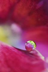 raindrop on pansy (AmyK75) Tags: flower macro pansy petal raindrop extrememacro
