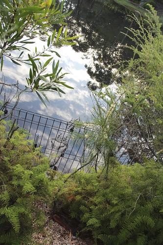 Sydney Featherdale Wildlife Zoo (4)