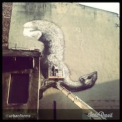 ROA in #Lodz! Powstaje kolejne rewelacyjne... (Instagramers Lodz) Tags: streetart art wall graffiti cool awesome wallart lodz photooftheday picoftheday roa urbanforms instadaily instacool uploaded:by=flickstagram igerslodz instagram:photo=536966839114391797400261271