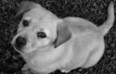 Puppy (WelshPixie) Tags: white black pupy
