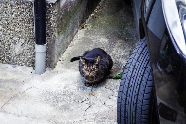 Today's Cat@2013-09-28