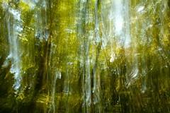 Subconscious (Sebastian B-B) Tags: experimental experimentation portlandoregon panning forestpark tiltshift tiltshiftlens 24mmtsef35lii scrollingshiftfunction iseeskullsallovertheplaceinthisphoto