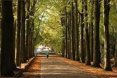 26 oktober 2013:  Gravenallee Almelo. (guus timpers) Tags: herfst centrum beuken huize almelo najaar gravenallee beukenlaan