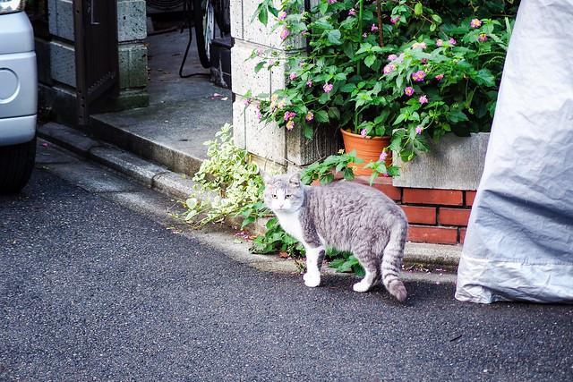 Today's Cat@2013-11-05