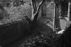 Connections (MPnormaleye) Tags: city trees urban bw house brick monochrome 35mm fence buildings wire patterns cities neighborhood utata weathered greyscale bwmonochrome