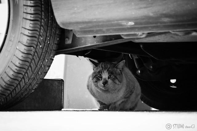 Today's Cat@2013-12-16