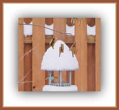 Snow Cone On Bird Feeder (bigbrowneyez) Tags: wood winter snow cold nature hat leaves foglie fence garden december birdfeeder sim