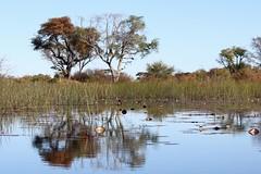 Okavango Delta (Dindingwe) Tags: delta botswana okavango okavangodelta deltadelokavango