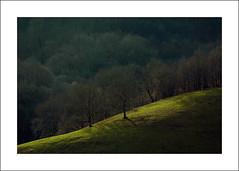 """Aujourd'hui (""""berend"""") Tags: nature soleil paysage corrze berend pr rayondesoleil puydarnac berenddoornenbal"""
