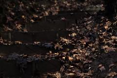 Zum Erfolg gibt es keinen Lift. Man mu die Treppe bentzen. - Emil Oesch (goeksel.aksoy) Tags: wood cold leave wet leaves rain stairs forest canon eos 50mm hiking f14 hike treppe dirt rainy blatt holz kalt wald bltter wandern regen regnerisch dreck wanderung erde nass feucht 550d