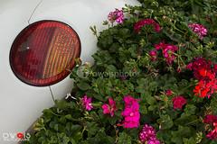 (OwaisPhotography (www.facebook.com/owaisphotos)) Tags: canon garden rebel dubai miracle uae images east getty middle dxb 2014 650d t4i owaisphotography gettyimagespakistanq12012