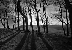 Chanctonbury Ring on The South Downs (Explored) (Simon Verrall) Tags: shadow blackandwhite tree silhouette sussex photo westsussex ring february hillfort 2014 chanctonbury cissbury thesouthdowns thesouthdownsway