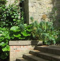 Jardins de Culzean Castle, Maybole, South Ayrshire, Ecosse, Grande-Bretagne, Royaume-Uni. (byb64) Tags: park uk greatbritain parco garden scotland europa europe unitedkingdom nt jardin eu escocia ailsa nationaltrust parc garten kennedy giardino ue schottland reinounido ayrshire ecosse robertadams scozia grossbritanien culzean culzeancastle royaumeuni granbretana grandebretagne southayrshire jardinanglais maybole nationaltrustofscotland cassilis xviiie vereinigtesknigreich cullain