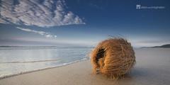Coconut - QLD Australia (Garry - www.visionandimagination.com) Tags: vacation panorama holiday beach landscape photography coconut object debris australia shore queensland dontlookbackyouarenotgoingthatway
