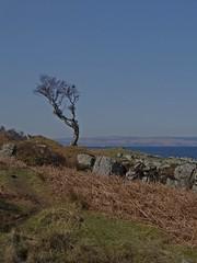Opposites (Bricheno) Tags: tree island scotland clyde escocia arran isleofarran szkocja schottland scozia laggan cosse  esccia   bricheno scoia