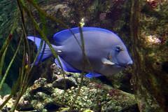Aquarium de Paris  (11) (Mhln) Tags: paris aquarium requin poisson trocadero poissons meduse 2015 cineaqua