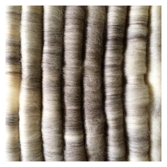 41/365: Fifty shades of grey rolags :-) #spin365 #365challenge #spinningwool #spinningyarn #spinningfiber #merino #fiber #colorway #poemsaboutmeshop #poemsaboutmeknits #etsy #handspun #handmade #2ply #gradient #colorgradient #spinnersoninstagram #wool #no
