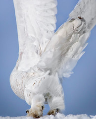 """The Other Side"" 
