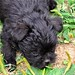 """puppy tdc • <a style=""""font-size:0.8em;"""" href=""""http://www.flickr.com/photos/129891154@N03/16419471276/"""" target=""""_blank"""">View on Flickr</a>"""