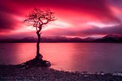 Milarrochy Tree (xXRandomTaskXx) Tags: sunset lochlomond balmaha milarrochytree