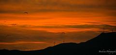 Coucher de soleil  Ttouan - Maroc (Bouhsina Photography) Tags: sunset sky panorama birds canon wow landscape outside wind morocco maroc marruecos montain ttouan oiseaux oliennes eoliennes bouhsina 5diii ef100400ii bouhsinaphotography