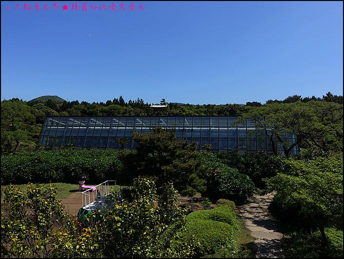 濟州山茶花庭院 (29).JPG