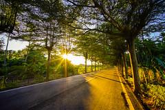 Golden Sunset () Tags: sunset sun tree green golden sony voigtlander heliar superwide a7m2 15mmf45iii