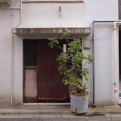 Tokyo Potted Gardens (Nemury) Tags: door plant flower tree green window wall garden tokyo alley pot pottedgarden flowerpot   potted  plantpot   pottedflower