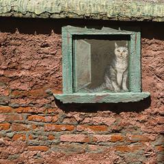 Feigned Tabby (Maria Sciandra) Tags: streetart texture window cat mexico bricks masonry urbanexploration sanmigueldeallende weathered naivepainting fujifilmx100 mariasciandraphotography