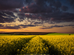 Primary Colours (Richard Walker Photography) Tags: sunset sky field clouds barn landscape oilseedrape landscapephotography
