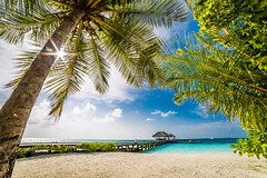 The Palm (icemanphotos) Tags: ocean travel trees wedding sea summer vacation sky panorama holiday plant seascape green love nature water swim landscape outside outdoors hotel sand scenery perfect holidays heaven solitude paradise honeymoon snorkel outdoor walk turquoise jetty sandy tan scenic dry nobody lagoon tourist palm resort dreaming snorkeling foliage exotic palmtree villa tropical romantic summertime seychelles srilanka relaxation relaxed maldives untouched idyllic luxury tropics tranquil sunbed tranquillity loungers honeymooner wonderlustreef theplacetobemaldives