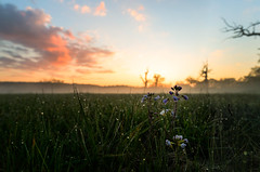 Flower in the morning sun (k.tusnio) Tags: cloud flower nature grass sunrise landscape nikon close poland polska natura hdr kwiatek rogalin kwiat 14mm krajobraz samyang d5100