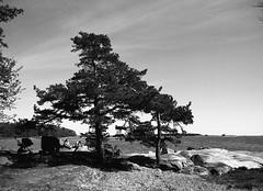 Lauttasaari scenery (Emptiness of Helsinki) Tags: trees sea people seascape film nature mediumformat finland landscape helsinki 645 rocks view cliffs ilford lauttasaari 120mm panf selfdeveloped panfplus humanelement