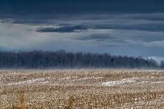 Earth and sky (guysamsonphoto) Tags: winter snow clouds hiver neige nuages guysamson sony70200f4 sonyalpha7rmkii
